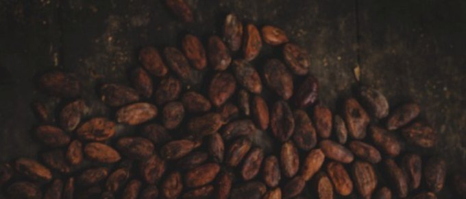Una adicción muy amarga los daños ambientales y sociales del cacao
